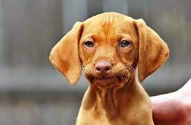 dog frowning.jpeg
