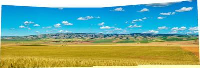 wheatfield.thumb.jpg.4800931da40494decf8c4f5da5b52ae3.jpg