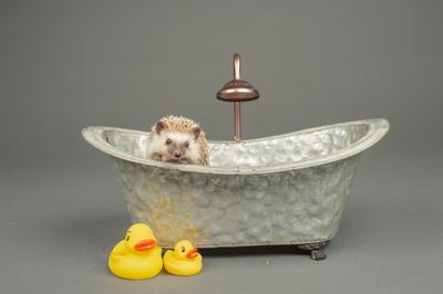 zoe bath photo.jpg